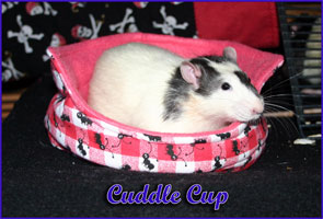 Cuddle Cup With Rat