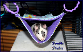 Double Decker Hammock Hanging with Rat