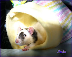 Tube Hammock With Rat