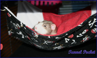 Tunnel Pocket Hammock Hanging